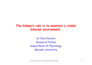 The kidney maintains a stable internal environment.
