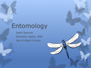 Entomology - Gloucester County Virginia