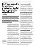 Body size, geometry, longevity and metabolism: do plant leaves
