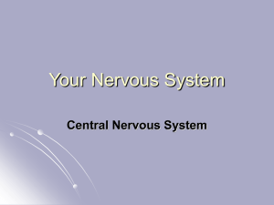 Central Nervous System {PowerPoint}