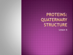 Proteins: Primary Structure