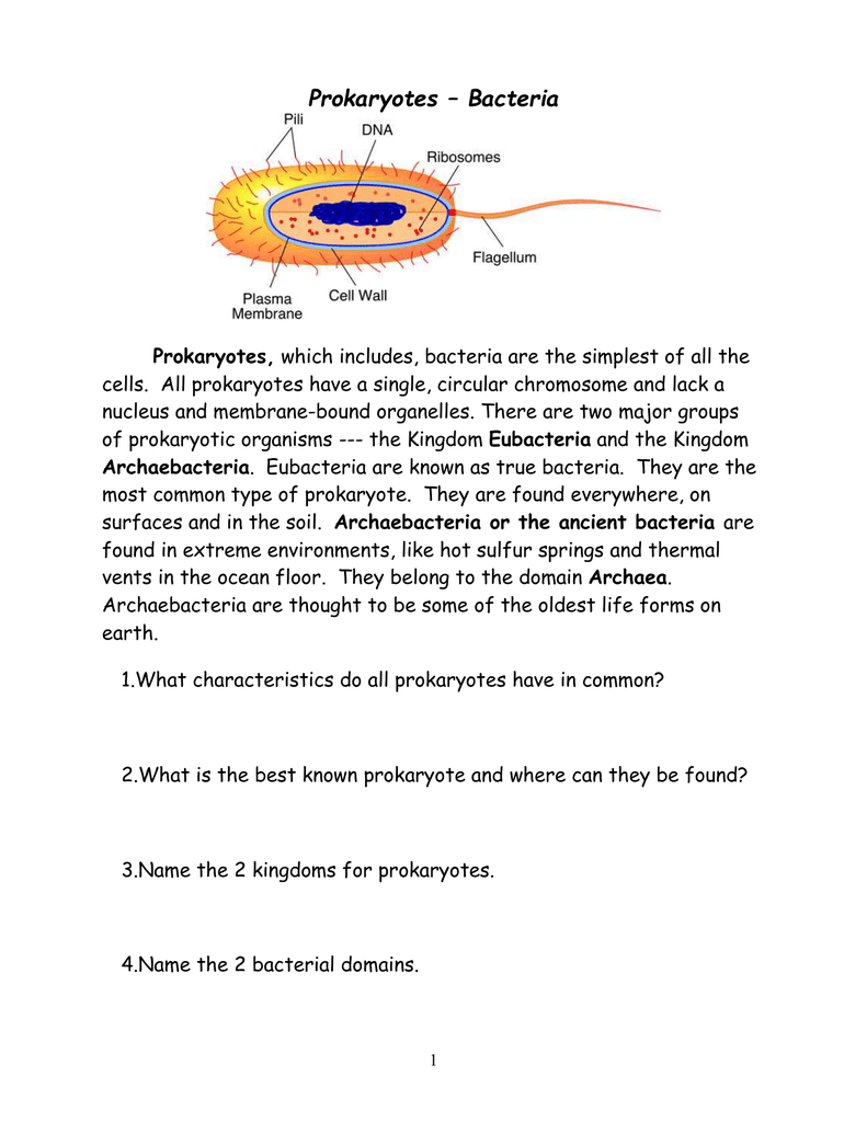 Prokaryotes Coloring Worksheet