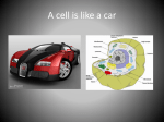 A cell is like a car - Monroe County Schools