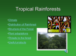 Tropical Rainforests - THE GEOGRAPHER ONLINE