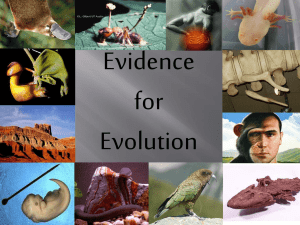 Homology– Evidence of a Common Ancestor
