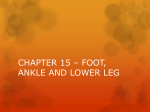 chapter 15 * foot, ankle and lower leg
