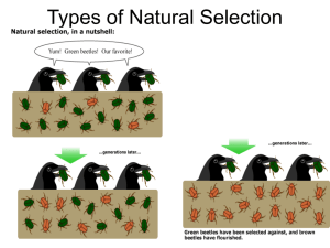 Types of Natural Selection