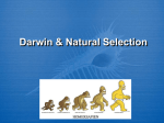 DarwinNatural_Selection Notes
