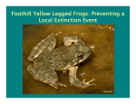 Foothill Yellow Legged Frogs: Preventing a Local Extinction Event