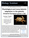 European green crabs (Carcinus maenas) are considered one of the