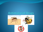 Antimalarial Drugs Malaria