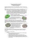 Grade 11 University Biology – Unit 3 Evolution