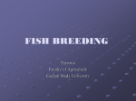 basic features of breeding