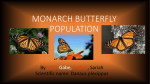 Graph of Monarch Butterflies Population Decreasing in Mexico