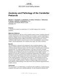 Anatomy and Pathology of the Cerebellar Peduncle