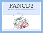 Fanconi Anemia Research Fund, Inc.