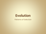 Evolution - 4ubiology
