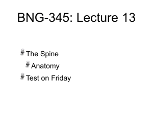 BNG-345: Lecture 13 The Spine Anatomy Test on Friday Learning