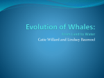 Evolution of Whales: From Land to Water