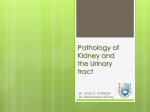 Benign and Malignant Tumours of the Kidney and