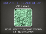 ch 4 cell wall