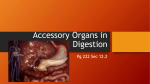Accessory Organs in Digestion