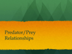 Predator/Prey Relationships