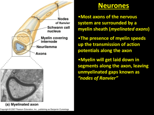 Myelin Sheaths Plant Hormone Intro