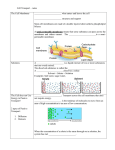 Transport Across the Membrane Notes