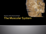 PPT#3.muscles of the head and neck
