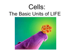 Two types of cells: