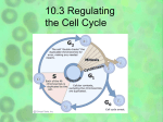 10.3 Regulating the Cell Cycle