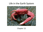 Life in the Earth System