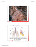 Pulmonary Adaptations The Respiratory System