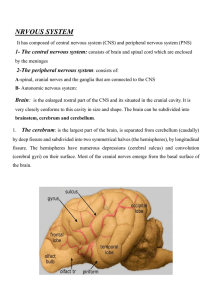 1- The central nervous system