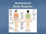 body-regions review ppt