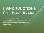 Living Functions - Mr. Coach Risinger 7Y Science