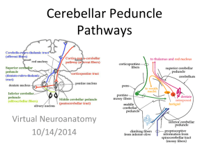 Cerebellar Peduncle Pathways