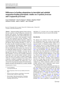 Differences in feeding adaptations in intertidal and