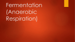 Fermentation (Anaerobic Respiration)