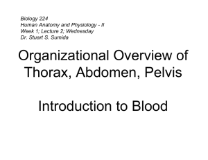 Organizational Overview of Thorax, Abdomen, Pelvis Introduction to