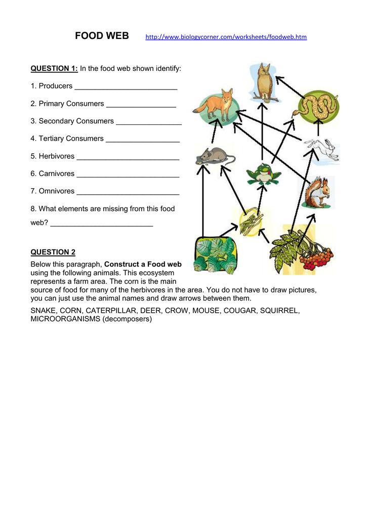 Food Web exercise