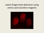 Latent fingermark detection using amino acid sensitive reagents