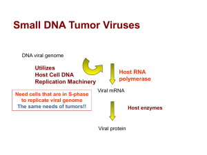 Small DNA Tumor Viruses