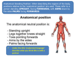 Unit 2 Anatomical language and positions 1.36