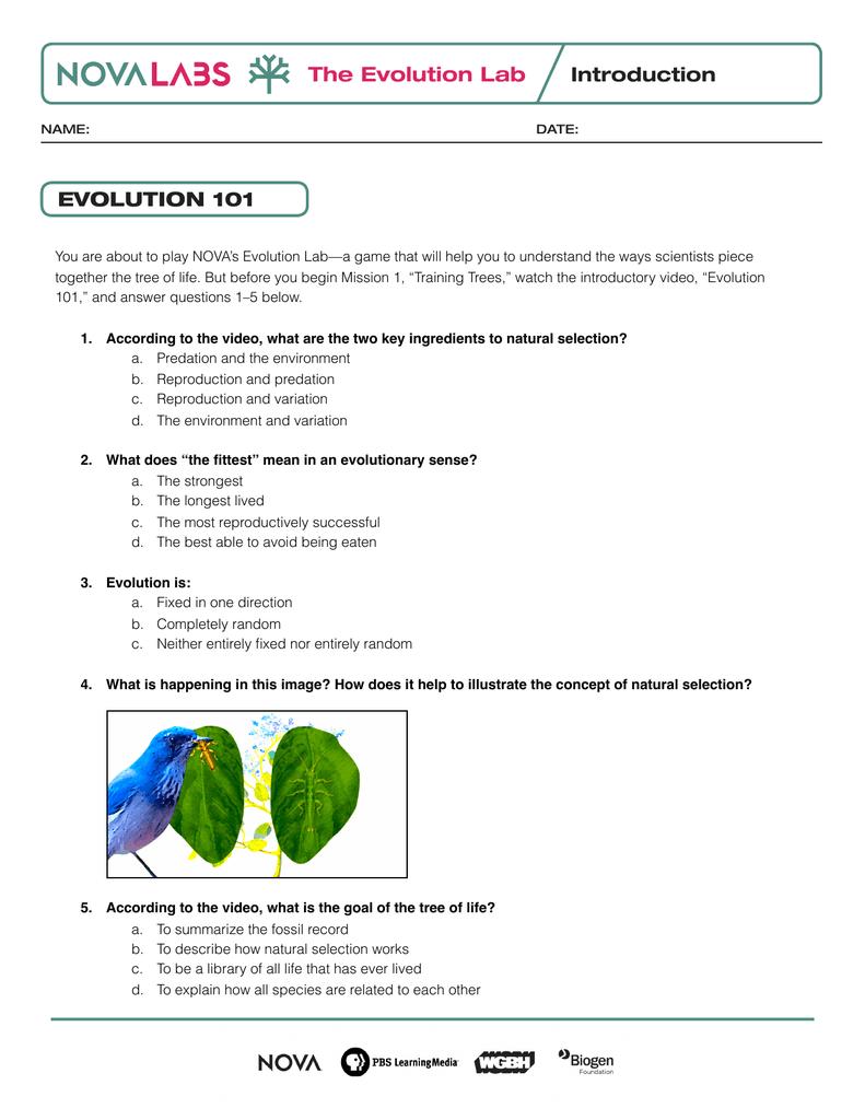 Evolution Lab Worksheets