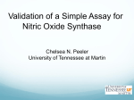 Enzyme Kinetics of iNOS - The University of Tennessee at Martin