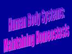 Human Body Systems - Anoka