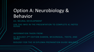 Option A A1 Neural Development