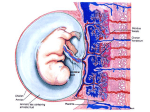 PLACENTAL FUNCTION